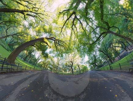 תמונות פנורמיות, עצים