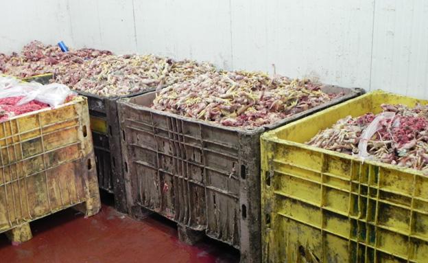 צפו בתפיסת הבשר במפעלים (צילום: משרד החקלאות ופיתוח הכפר)