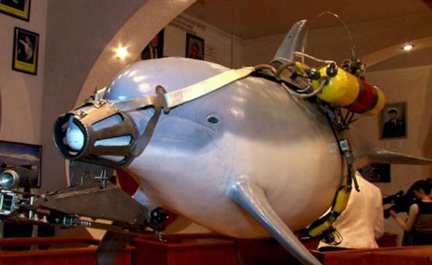 דולפין לוחם (צילום: מיכאיל סמנוב)