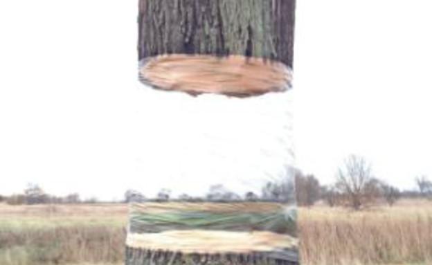העץ המרחף