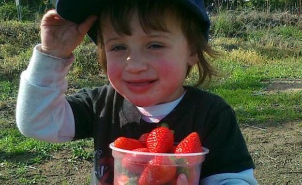 כמה תות (צילום: אוהד ב)