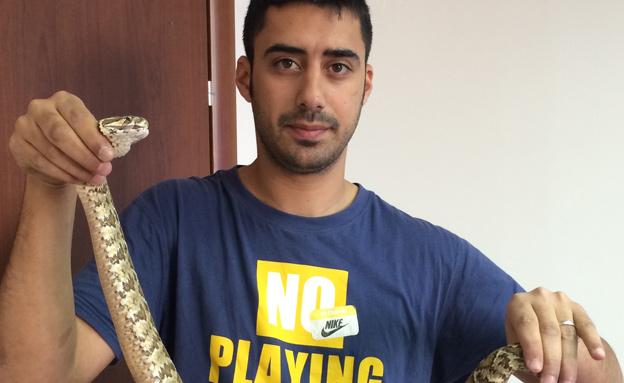 הנחש נלכד ושוחרר בטבע (צילום: אלי כהן)