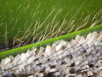 פרפר מתחת למיקרוסקופ (צילום: לינדן גלדהיל)