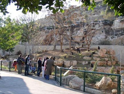 גן החיות הכי טוב - גן החיות התנכי