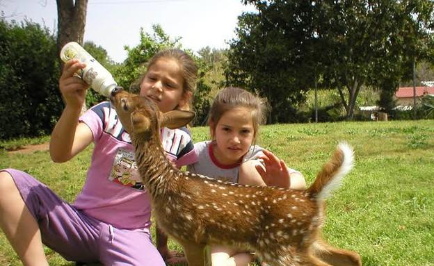 פינת הליטוף הכי טובה - לגעת בחיות, ספארי לילדים בעמק חפר (צילום: דפי יעקבס)