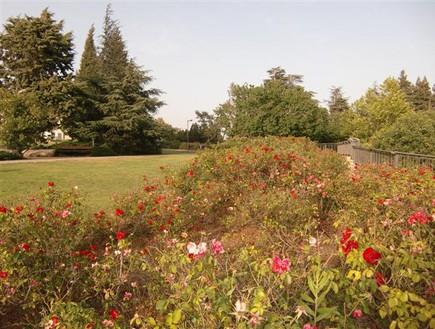 הגן הציבורי הכי טוב - גן הוורדים
