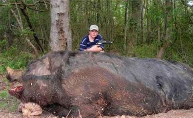 חיות ענקיות (צילום: viralnova.com)