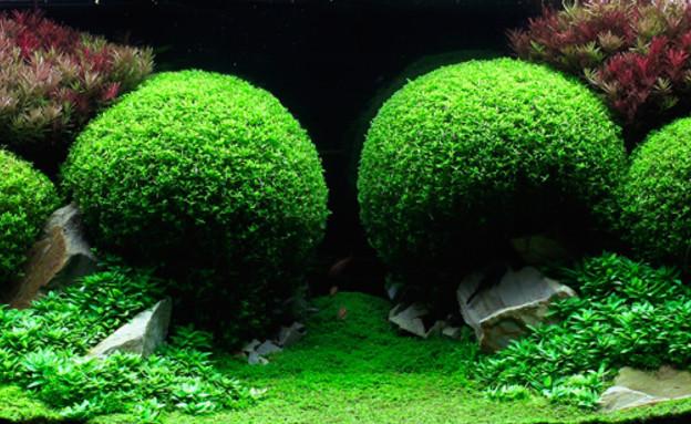 אקווריומים (צילום: en.iaplc.com)