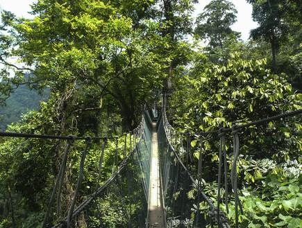 The Taman Negara Canopy Walkway, הגשרים הארוכים בעולם, קרדיט אימג'