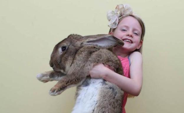 הארנב הכי גדול (צילום: Caters News Agency)