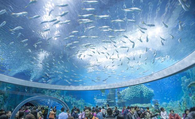 האקווריום הכי גדול (צילום: Guinness World Records )