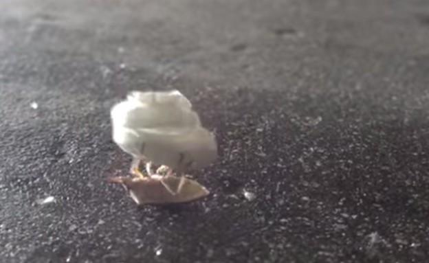 חרק ופופקורן (צילום: יוטיוב)