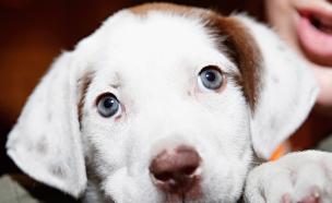 כלב חמוד (צילום: Cindy Ord, GettyImages IL)