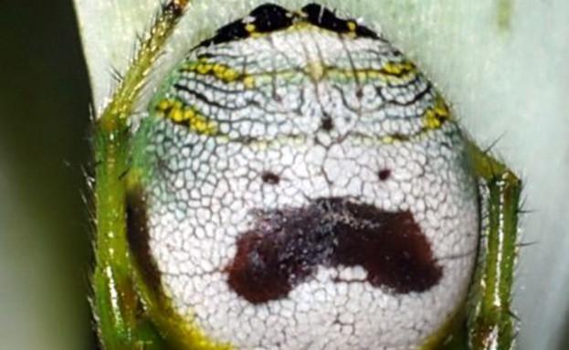 פנים על חרקים (צילום: Caters News Agency)