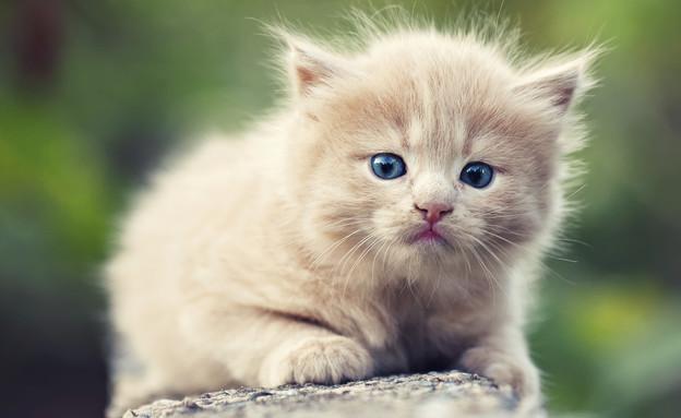חתול עצוב (צילום: Tsokur, Thinkstock)