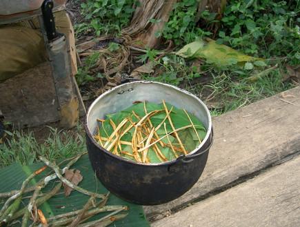 בישול צמח האייוואסקה