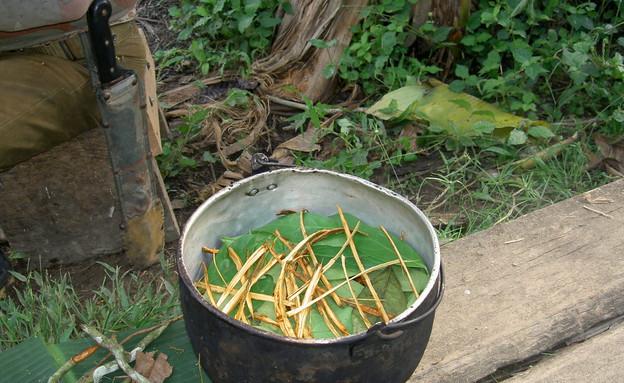 בישול צמח האייוואסקה (צילום: Terpsichore , ויקיפדיה)
