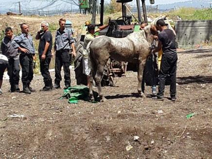 סוף טוב, הסוס יצא בשלום (צילום: דוברות כבאות מחוז חוף)