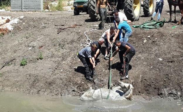 חילוץ הסוס, היום (צילום: דוברות כבאות מחוז חוף)