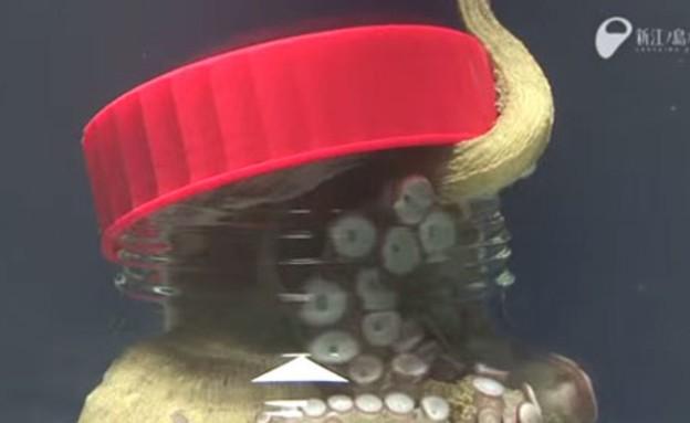תמנון בצנצנת (צילום: יוטיוב)