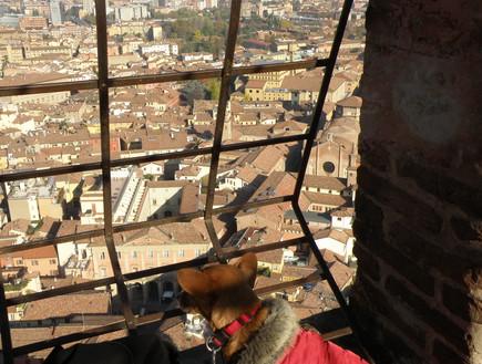 שולי הכלבה צופה על העיר