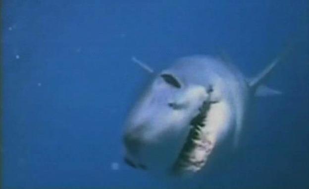 תקיפת כריש (צילום: חדשות 2)