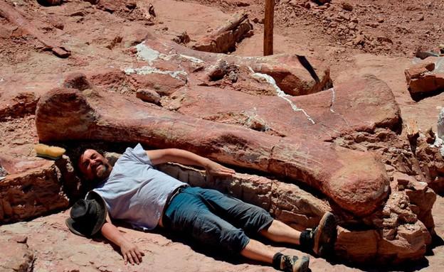 הדינוזאור הכי גדול (צילום: BBC)