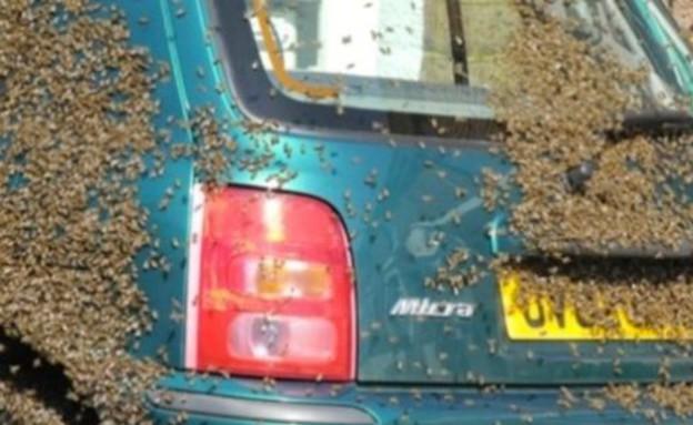 דבורים על אוטו (צילום: יוטיוב)
