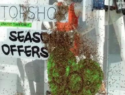 דבורים בטופשופ (צילום: The London Evening Standard)