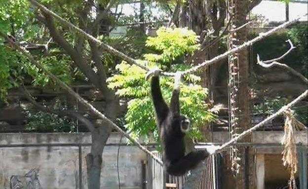 חי כיף (צילום: חדשות 2)