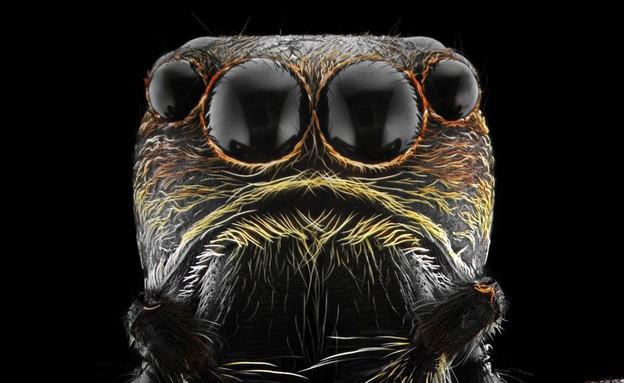 חרקים מקרוב (צילום: Barcroft Media)