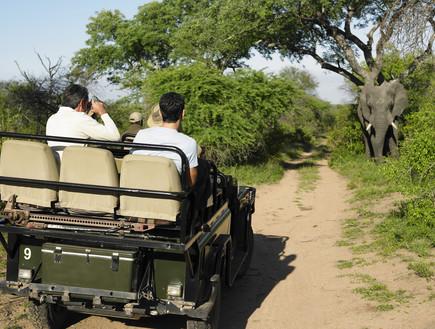 ארקיע - ספארי קניה