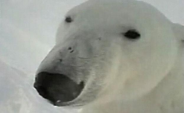 בן זוגה של הדובה - מזווית מבטה