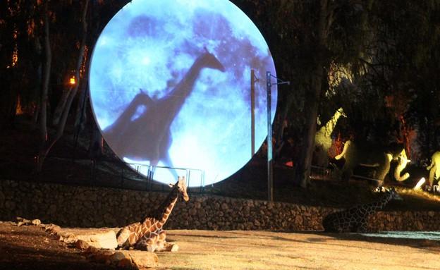 קסם בספארי, ספארי, גן החיות (צילום: ראובן שניידר)
