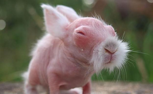 חיות בלי פרווה (צילום: Daily Mail)