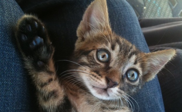 גור חתולים (צילום: נעם וינד)