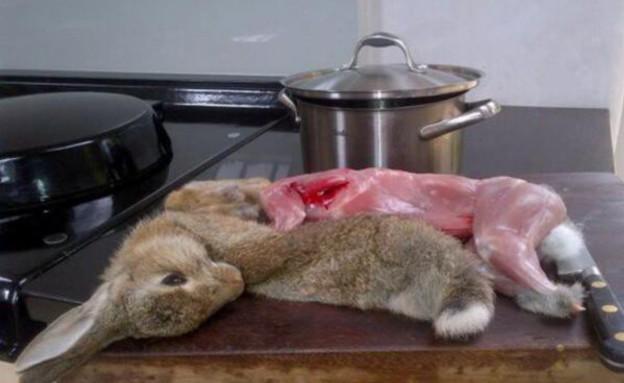ארנב מבושל (צילום: ג'נט ווינטרסון)