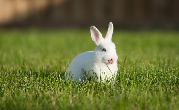 ארנבים מוציאים לשון (צילום: boredpanda.com)