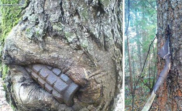 היער שבולע את המלחמה (צילום: dasBILD)