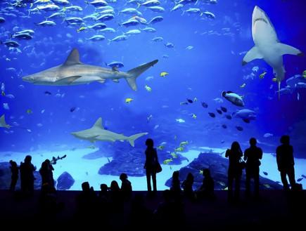 פעילויות לילדים בחופש הגדול 2014 - בריכת כרישים המצפה התת ימי אילת