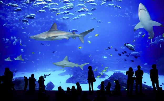 פעילויות לילדים בחופש הגדול 2014 - בריכת כרישים המצפה התת ימי אילת (צילום: המצפה התת ימי אילת,  יחסי ציבור )