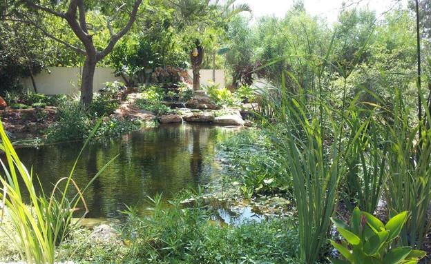 בריכות אקולוגיות, מים שקטים בריכות אקולוגיות (צילום: סמדר יחיאלי)