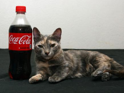 החתול הכי קטן