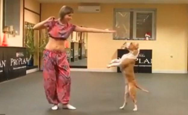 כלב רוקד (צילום: יוטיוב)