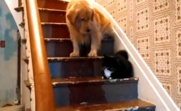כלב פחדן (צילום: יוטיוב)