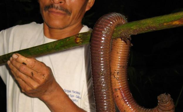 תולעת ענקית (צילום: projectnoah.org)