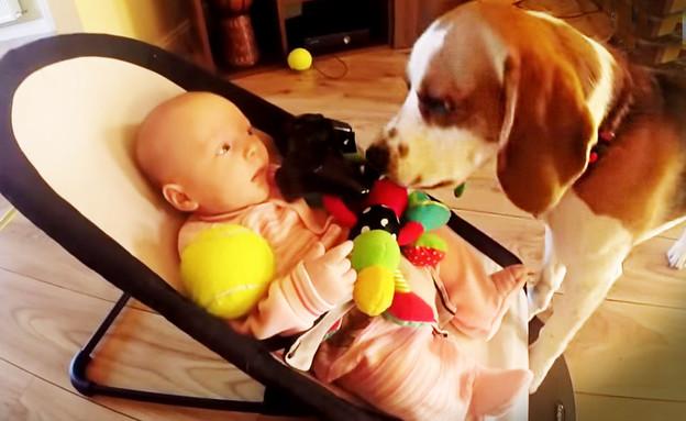 הכלב המפצה (צילום: CharlieDaDog, יוטיוב)