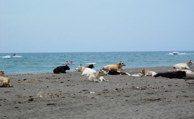 חופי הבלקן (צילום: Mladifilozof, ויקיפדיה)