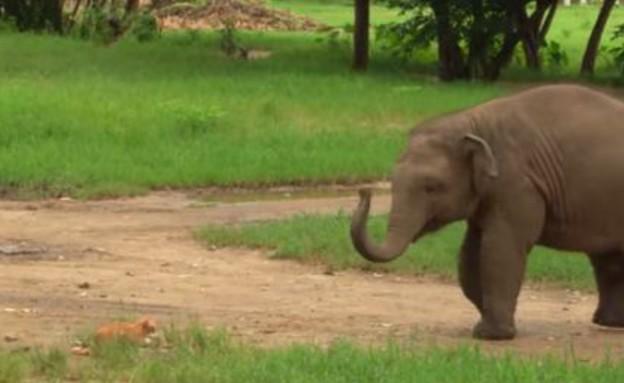 פיל וחתול (צילום: יוטיוב)