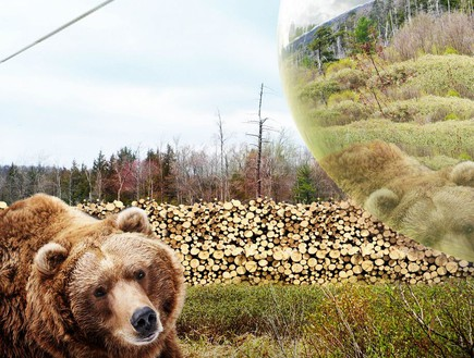 גן חיות, דנמרק, דוב